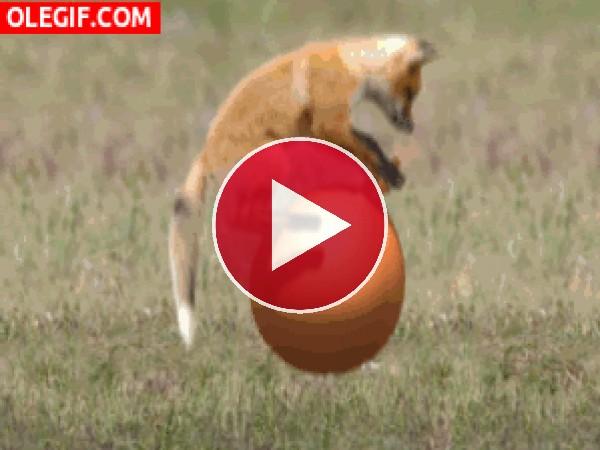 Zorro saltando sobre una bola loca