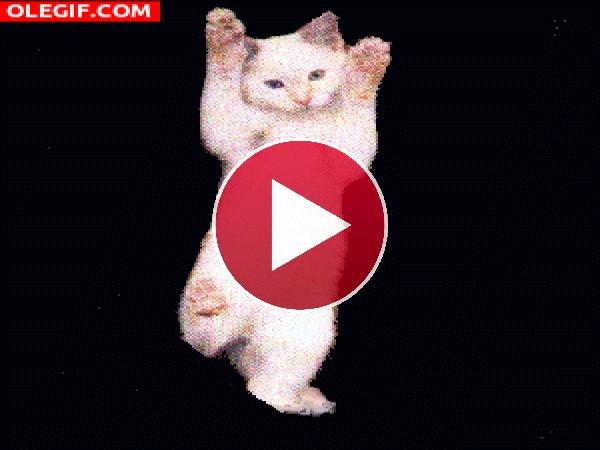 GIF: Gatito bailarín