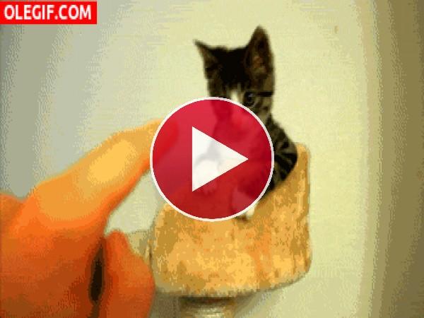 GIF: Este gatito tiene ganas de jugar