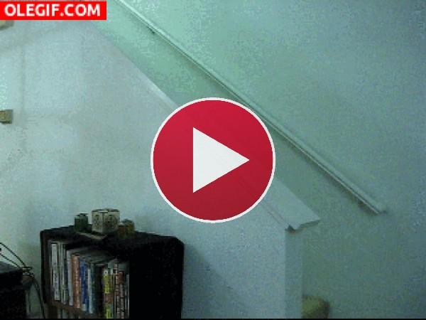 GIF: Un gato levitando