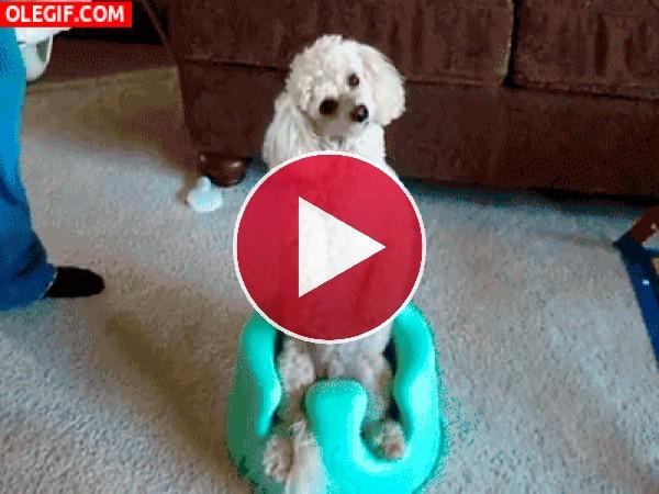 A este perro le gusta sentarse en el orinal