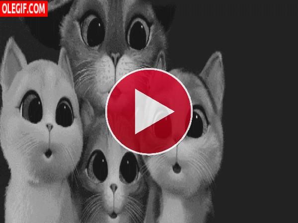 GIF: Gato y los tres diablos contemplando el vuelo de una mosca