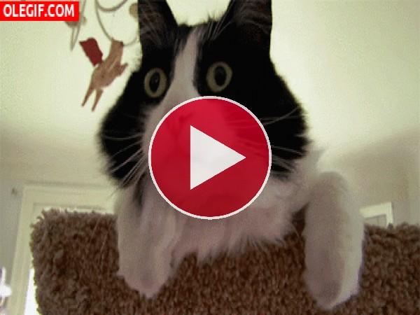 GIF: Este gato está alucinando