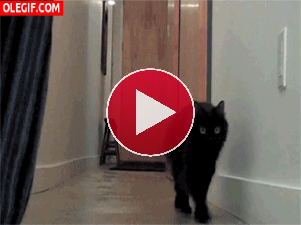 GIF: Este gato quiere ese globo