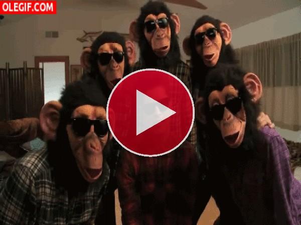 Cantando con unos chimpancés