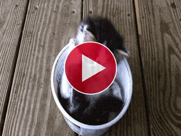 Mira a este gatito lamiéndose la pata