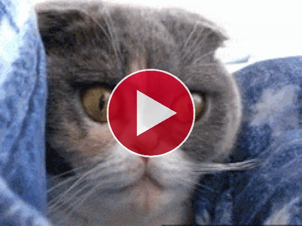 Gato con las pupilas dilatadas