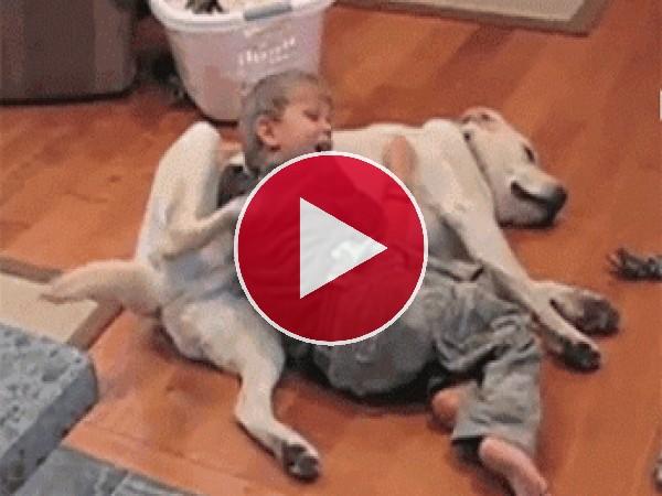 GIF: Niño y perro acariciándose