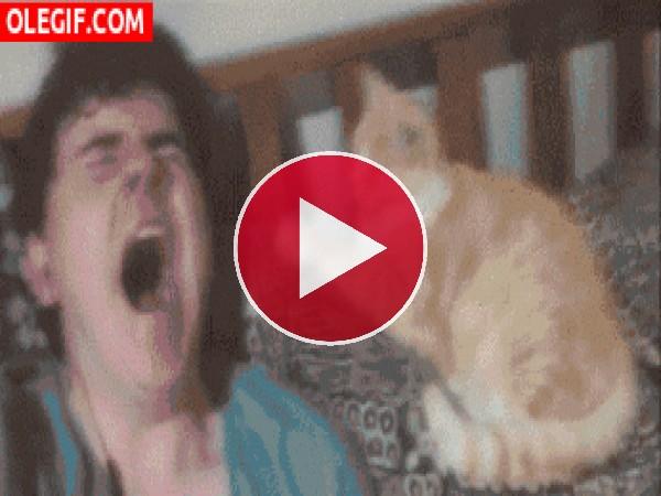 GIF: Le pegué el bostezo al gato