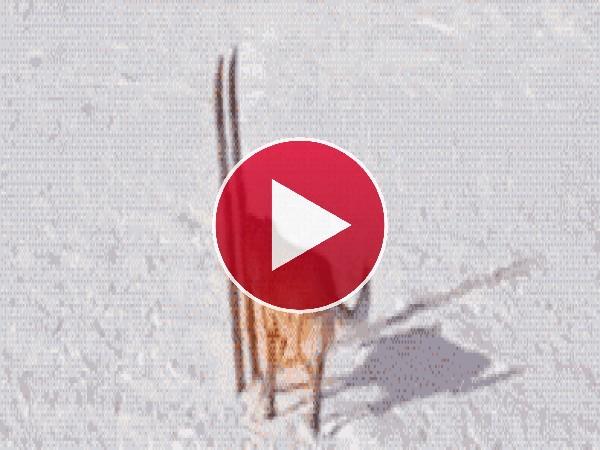 Mira a este perro esquiando