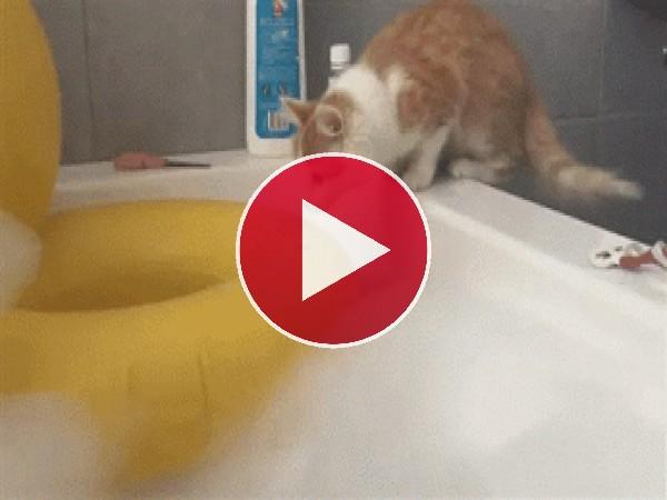 ¡Gato al agua!
