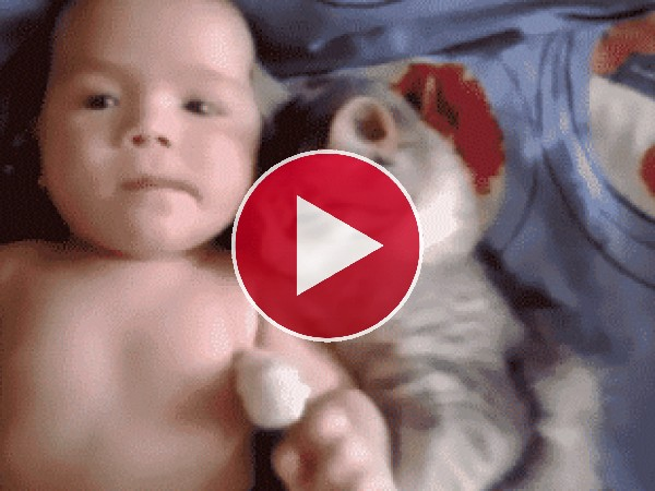 GIF: A este gato le encanta abrazar al bebé