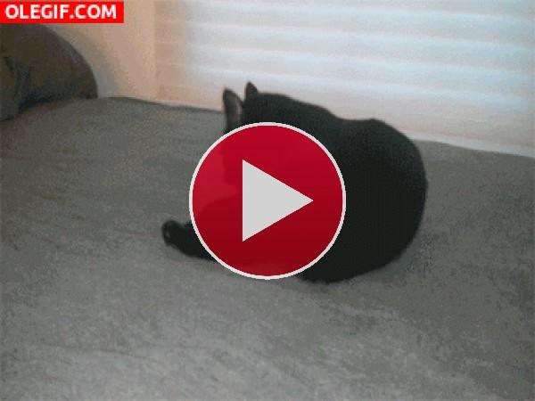 El gato ninja