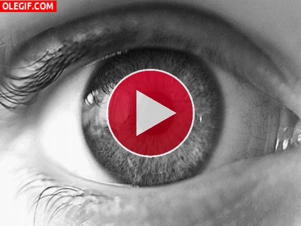 Dilatación de una pupila