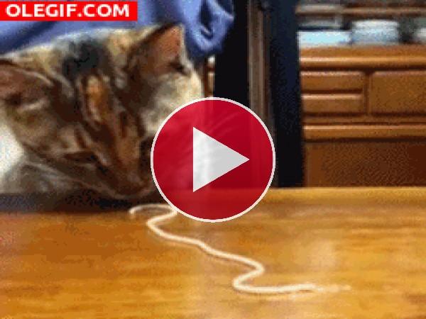 GIF: Mira a este gato comiendo un espagueti