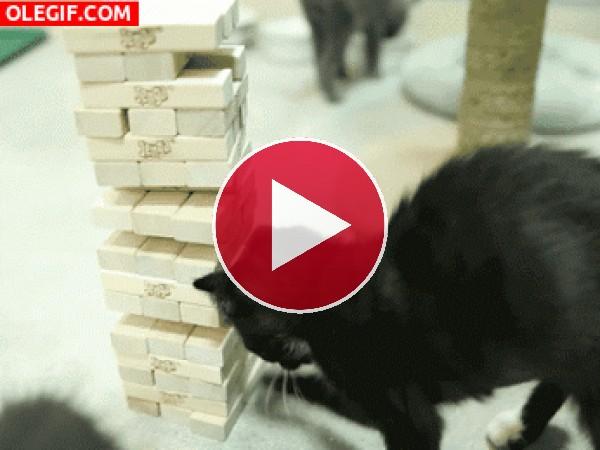 Mira a este gato jugando al jenga