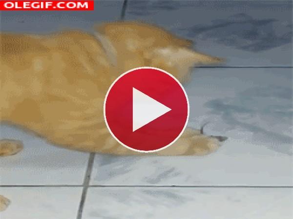 GIF: A este gato se le escapa el ratón