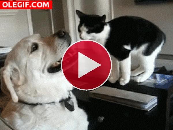 Mira a este gato acariciando el hocico del perro