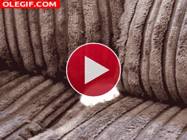 GIF: Gato asomando la cabeza