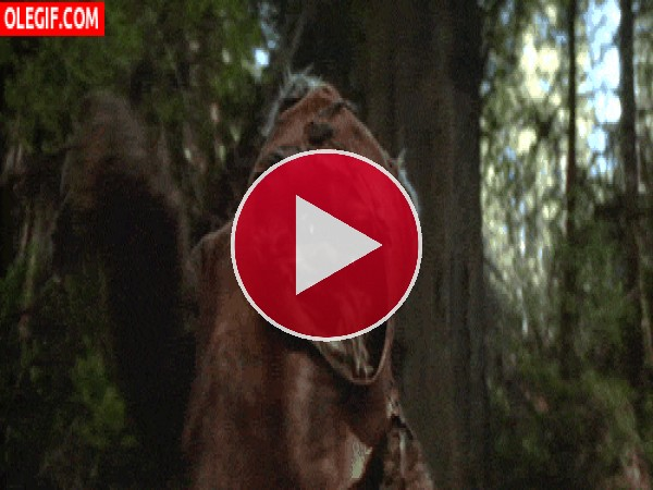 GIF: Este Ewok es un poco torpe
