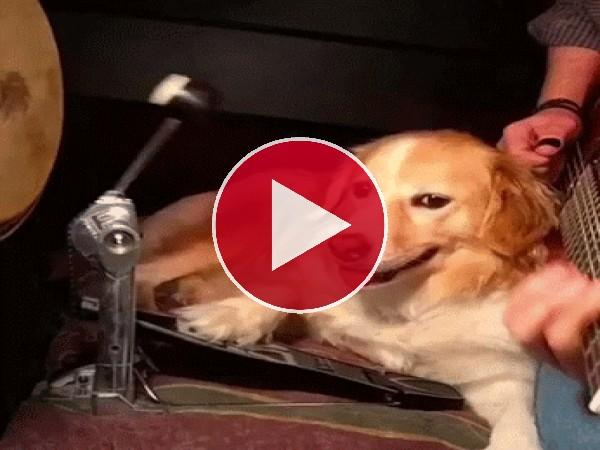 Este perro es todo un músico