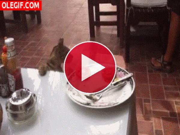 GIF: A este gato le gusta el tomate