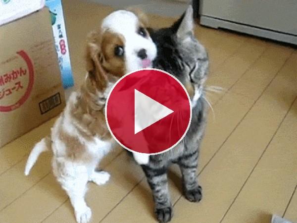Este cachorro no para de peinar al gato