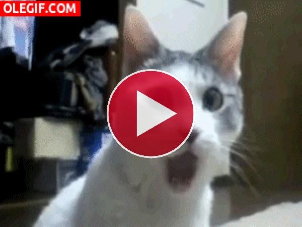 Este gato se ha quedado muy sorprendido