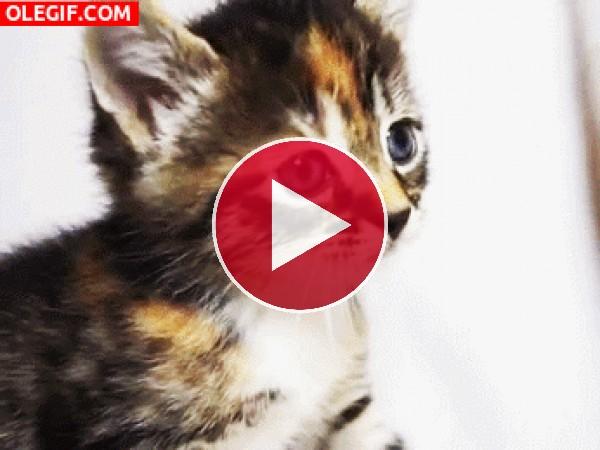 GIF: La vida de varios gatitos