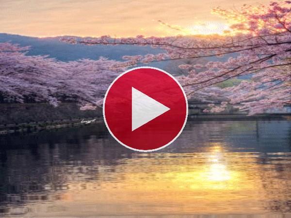 Cerezos en flor sobre el agua