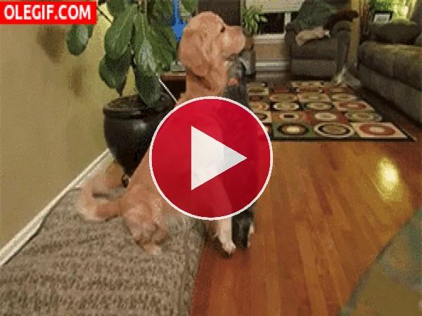 Mira cómo se quieren el perro y el gato