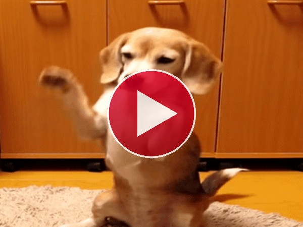 GIF: A este perro le gusta jugar con la pelota
