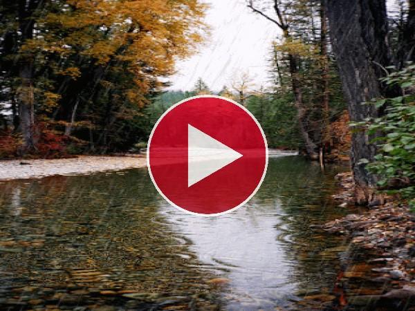 GIF: Lluvia de otoño