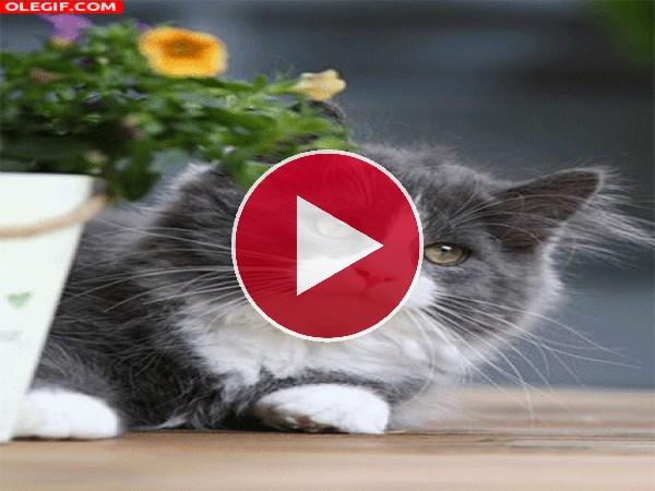 GIF: Un gato moviéndose lentamente