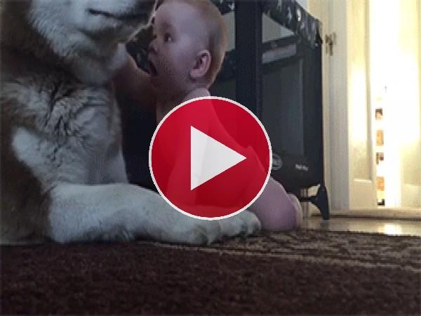 Mira a este perro cómo juega con el bebé
