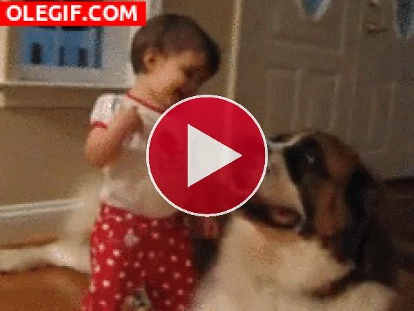 GIF: Vaya abrazo le da esta niña al San bernardo