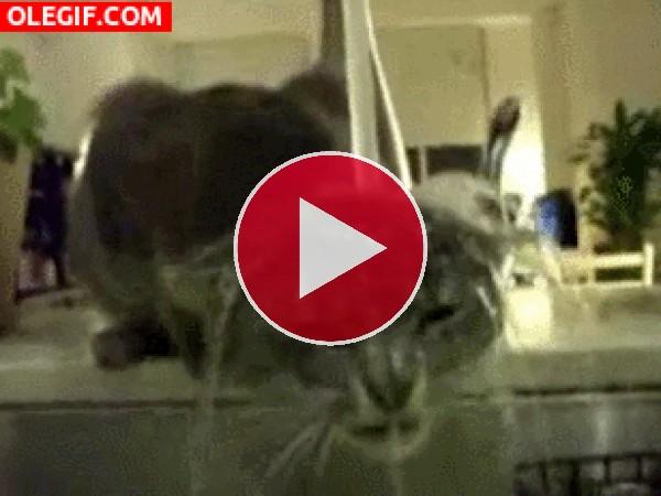 A este gato le gusta refrescarse bajo el chorro