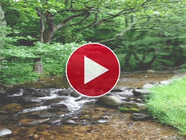 GIF: Río fluyendo entre las piedras