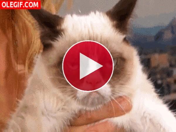 GIF: Este gato está cabreado