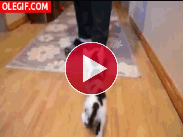 Mira cómo trepa este gatito para tomar el biberón