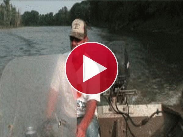 Golpeado por un pez