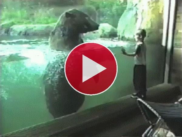 Este oso quiere atrapar al niño