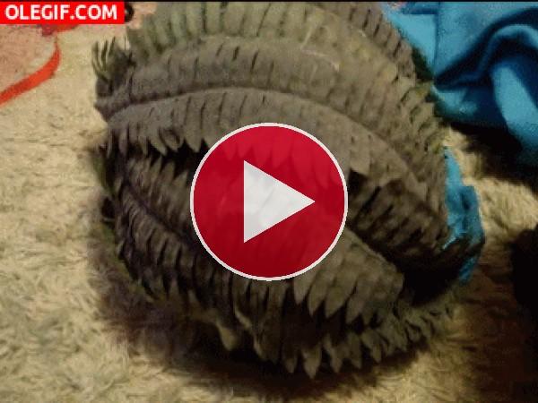 GIF: Un gato camuflado