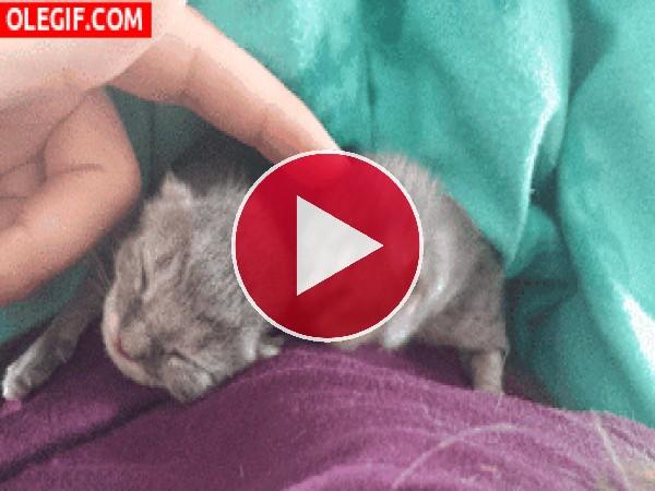 Acariciando a dos gatitos bebés