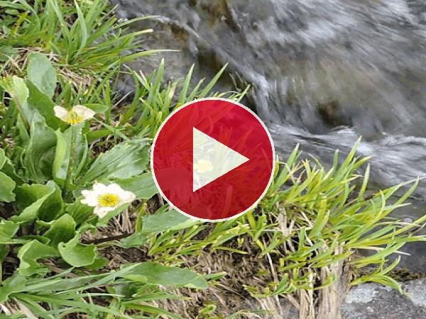 Agua fluyendo junto a unas flores