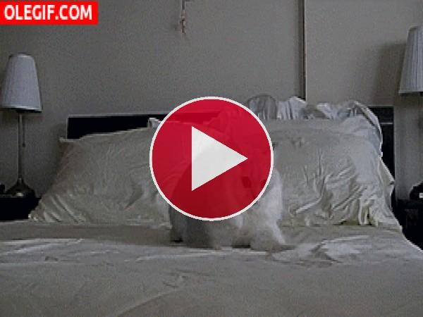 GIF: Este gato está muy agitado