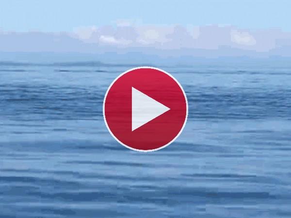 Mira a esta orca saltando en el mar