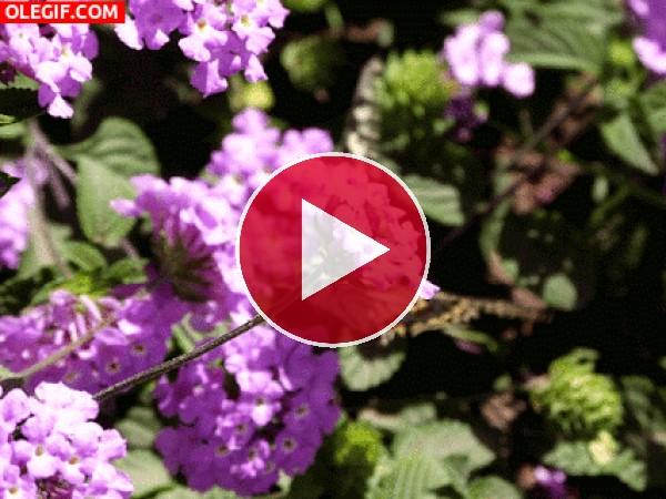 Mariposa batiendo sus alas entre las flores