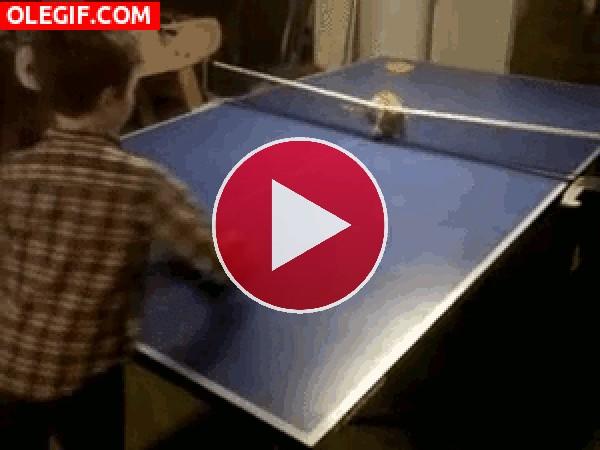 GIF: Este gato es un buen jugador de ping pong
