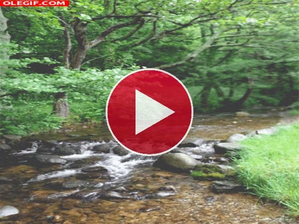 GIF: El agua del río fluyendo entre las piedras